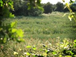 poppy-field-3