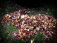 Photo of rat shaped leaf pile
