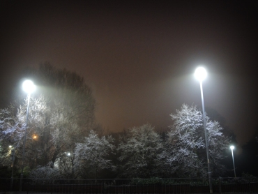 Photo of Frosty trees in the fog